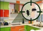 Fumigue su casa piojos pulgas