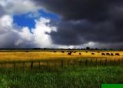 Vendo campo agro-ganadero ii